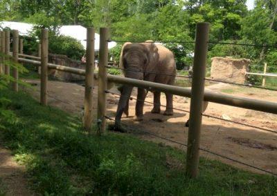 seneca-park-zoo-elephant-enclosure-02