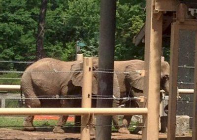 seneca-park-zoo-elephant-enclosure-03