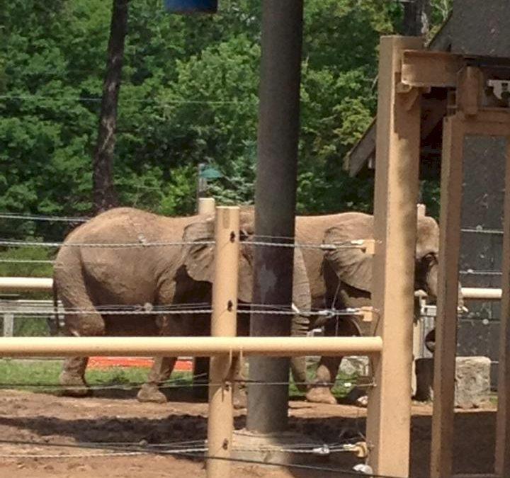 Seneca Park Zoo Elephant Enclosure Fence and Supports